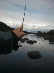 fast_fisk_tisleia