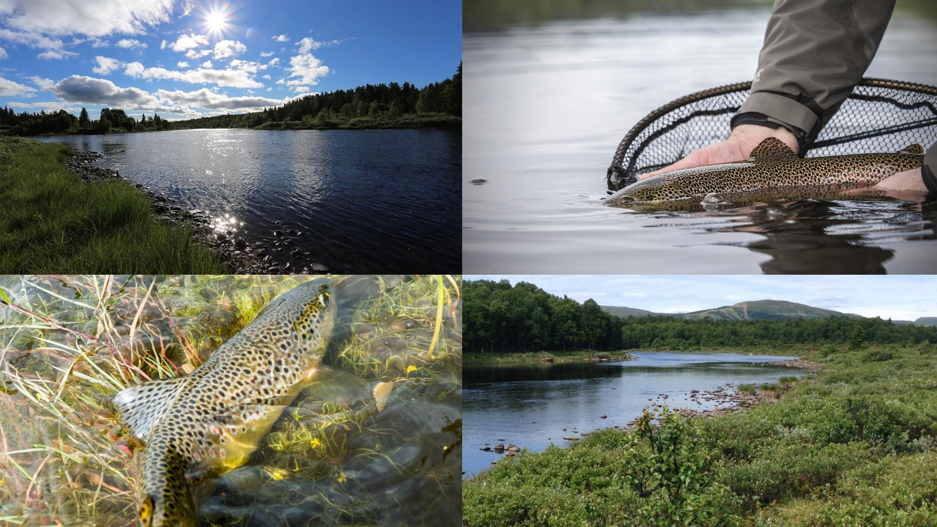 Tisleia collage2